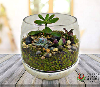 Succulent Terrarium in Indianapolis IN, Steve's Flowers and Gifts