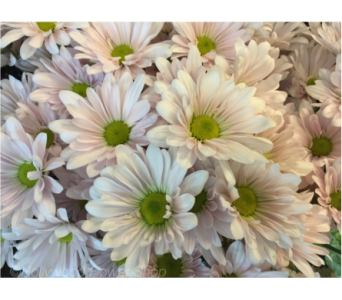 Country Daisy Bouquet in Mount Kisco NY, Hollywood Flower Shop