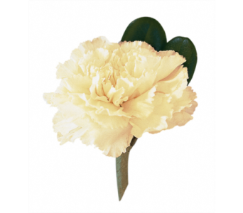 Carnation Boutonniere in Little Rock AR, Tipton & Hurst, Inc.