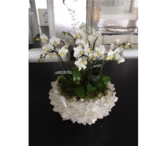 CLASSIC QUARTZ CRYSTAL ORCHID BOWL  in Bellevue WA, CITY FLOWERS, INC.