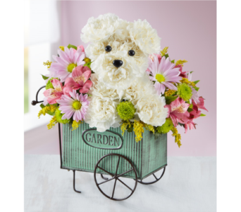 Pup N Posies in Bradenton FL, Ms. Scarlett's Flowers & Gifts