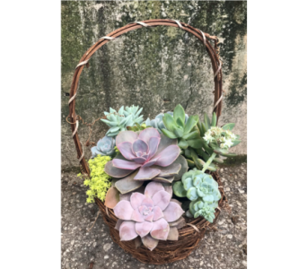 Succulent Basket  in Dayton OH, Furst The Florist & Greenhouses