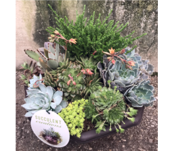 Succulent Bowl in Dayton OH, Furst The Florist & Greenhouses
