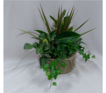 Tranquil Tropicals in Belleville ON, Barber's Flowers Ltd