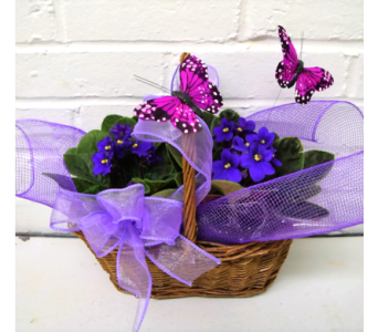 Violets and Butterflies in Springfield MO, House of Flowers Inc.