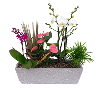 Orchids in Stone in Corunna ON, KAY'S Petals & Plants