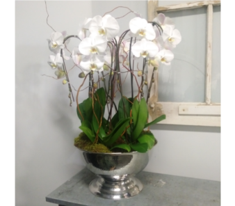 the Grand Cascade in Thornhill ON, Orchid Florist