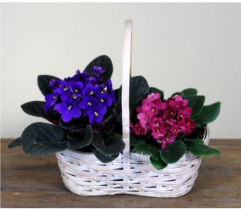 Small African Violet Basket in Merrick NY, Feldis Florists