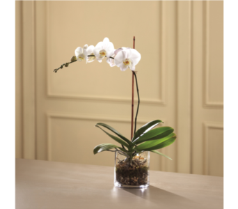 The FTD White Orchid Planter in Southfield MI, Thrifty Florist