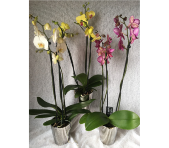 Danielle's Graceful Orchids in Dieppe NB, Danielle's Flower Shop