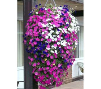 Hanging Mixed Planter in Owensboro KY, Welborn's Floral Company