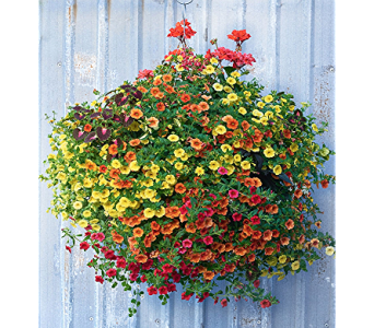 Sun Hanging Basket in Oconto Falls WI, The Flower Shoppe, Inc