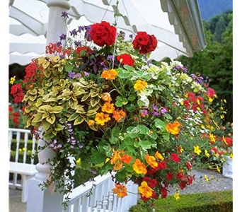 Shade Hanging Basket in Oconto Falls WI, The Flower Shoppe, Inc