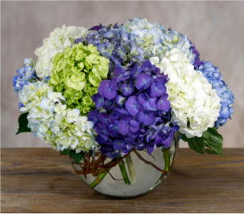 Happy Hydrangea in Merrick NY, Feldis Florists