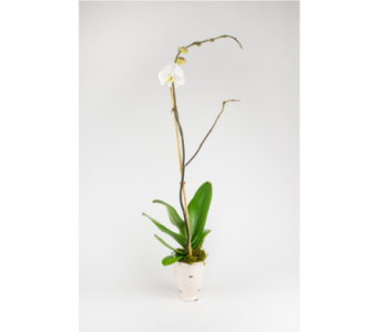 Single Orchid in Little Rock AR, Tipton & Hurst, Inc.