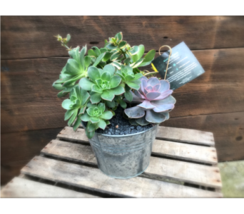 succulent sensation in Kimberly WI, Robinson Florist & Greenhouses