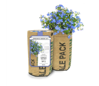 Forget Me Not Grow Kit in Pascagoula MS, Pugh's Floral Shop, Inc.