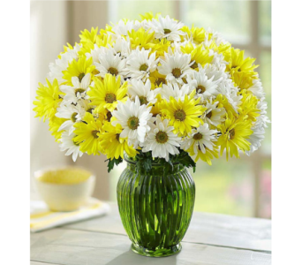 Yellow & White Daisy Bouquet in Huntington WV, Archer's Flowers and Gallery