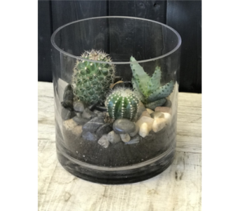 Medium Cacti Garden in Calgary AB, The Tree House Flower, Plant & Gift Shop