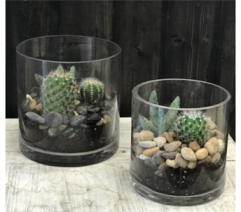Cacti Garden Pair in Calgary AB, The Tree House Flower, Plant & Gift Shop