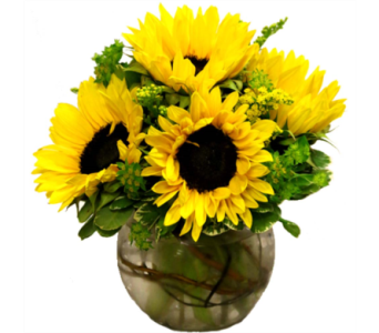 Bowl Full of Sunshine in Orlando FL, Windermere Flowers & Gifts