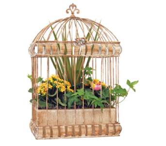 Valencia Birdcage Planter in St Catharines ON, Vine Floral