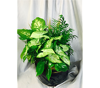 Exquisite Greens - Medium Dishgarden in Pascagoula MS, Pugh's Floral Shop, Inc.