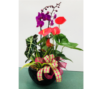 Large Orchid Anthurium Planter in Tillsonburg ON, Margarets Fernlea Flowers & Gifts