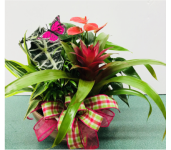 Anthurium Bromeliad Mixed Tropical Garden in Tillsonburg ON, Margarets Fernlea Flowers & Gifts