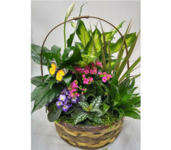 Planted Basket in Alliston, New Tecumseth ON, Bern's Flowers & Gifts