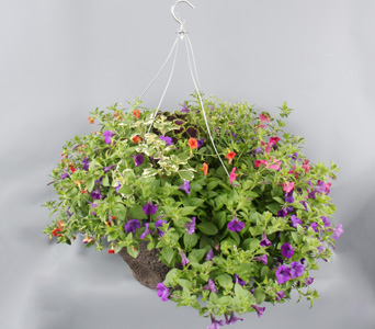 Hanging Basket in Darien CT, Nielsen's Florist And Garden Shop