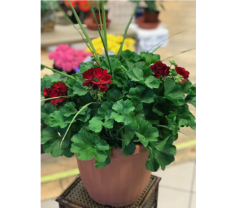Red Geranium Patio Planter in Moorhead MN, Country Greenery