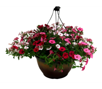 Proven Winners, Hanging Basket  in Detroit and St. Clair Shores MI, Conner Park Florist