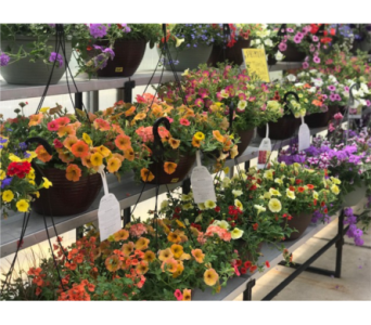 Summer Mix Hanging Basket in Kimberly WI, Robinson Florist & Greenhouses
