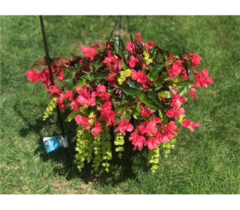 Beauty Basket in Kimberly WI, Robinson Florist & Greenhouses
