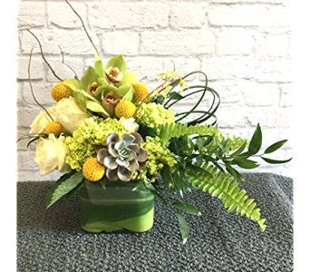Succulent Green in Raleigh NC, North Raleigh Florist