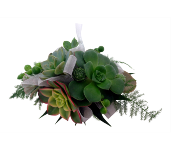 Succulent Wrist Corsage  in Detroit and St. Clair Shores MI, Conner Park Florist