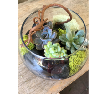 Miniature Terrarium in Palo Alto CA, Village Flower Shoppe