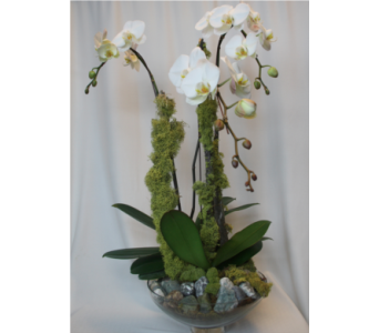 Orchids & Moss in Victoria BC, Fine Floral Designs