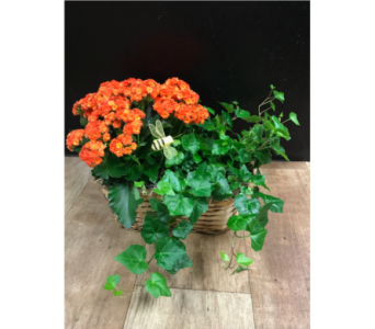 European Garden in Fargo ND, Dalbol Flowers & Gifts, Inc.