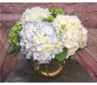 Mighty Hydrangea in Wellington FL, Wellington Florist