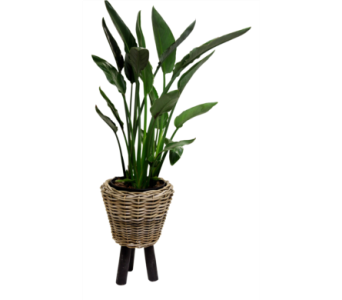 Bird of Paradise In Wicker  in Detroit and St. Clair Shores MI, Conner Park Florist