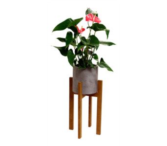 Berlin Planter - Anthurium  in Detroit and St. Clair Shores MI, Conner Park Florist