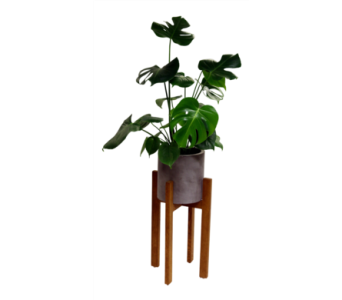 Berlin Planter - Monstera  in Detroit and St. Clair Shores MI, Conner Park Florist