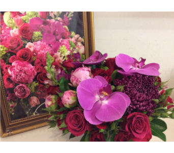 Hot Pinks in Toronto ON, Verdi Florist