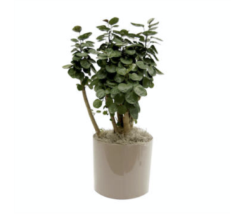 Aralia Fabian in Little Rock AR, Tipton & Hurst, Inc.