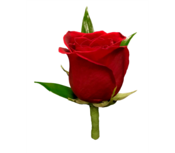 Red Rose Boutonniere in Stuart FL, Harbour Bay Florist