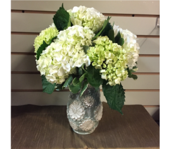 White and Green Hydrangea in Mount Kisco NY, Hollywood Flower Shop