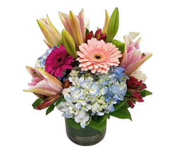 Summer Sensation in Plano TX, Z's Florist