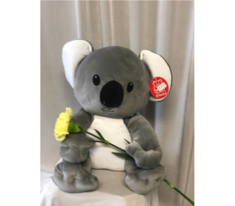 Koala Plush in Elyria OH, Botamer Florist & More